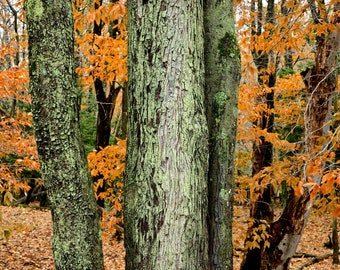 These Green Trees - Ludington State Park - Michigan Photography - Stock Photography