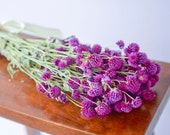 Purple globe amaranth,purple gomphrena, globe amaranth, gomphrena, purple wedding, purple florals, purple flowers