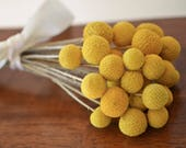 Billy ball bunch, craspedia, Bunch of craspedia, dried yellow flowers, Billy buttons, baby shower flowers