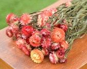 Bunch of Apricot Strawflowers, pink-orange strawflowers, apricot dried flowers, apricot strawflowers, peach dried flowers, peach strawflower