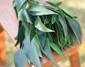 Preserved Green Willow Eucalyptus, eucalyptus for bouquets, greenery for garland, willow eucalyptus, green eucalyptus, preserved foliage