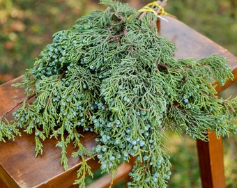 Fresh berried juniper bunch, pre-order now for holiday shipping, fresh evergreen branches, holiday greenery, fresh juniper cuttings