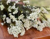 Preserved rice flower, white flowers, wedding flowers, filler, dried flower filler, white dried flowers