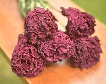 Burgundy dried peonies | Dried flowers for bouquets and arrangements | Dried flower bouquet | Dried flower bunch | Red peonies