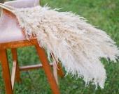Large plume pampas grass, boho wedding grass, ivory grass, ivory plume, preserved grass, preserved grass bunch, floral arrangement
