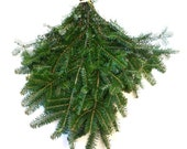 Fraser Fir branches, fresh evergreen branches, Christmas greenery, holiday greenery, fragrant greenery, fresh boxwood cuttings