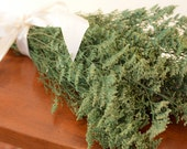 Bunch of preserved white tipped green misty, green caspia, green wedding, wedding decor