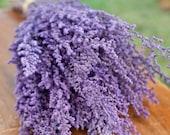 Preserved violet stoebe, purple preserved flowers for vase, purple filler flowers for wedding, lilac purple flowers, purple dried flowers