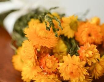 Bunch of Yellow Strawflowers, Dried Strawflowers, Yellow Dried decor, modern decor, modern wedding, wedding decor