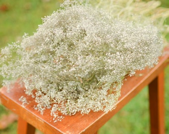 Natural dried baby's breath, unbleached baby's breath, natural dried gypsophilia, dried baby's breath