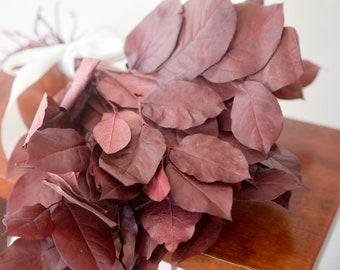 Bunch of burgundy lemon leaf, preserved lemon leaf, burgundy greenery, burgundy salal, burgundy florals, preserved salal, burgundy leaves