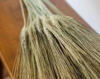Dried Bearded Wheat Bundle, dried wheat, bearded wheat, wheat bunch, wheat bundle, dried grains, green wheat, green grains