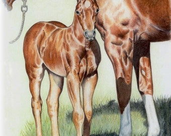 The New Filly Original Colored Pencil by B.Bruckner
