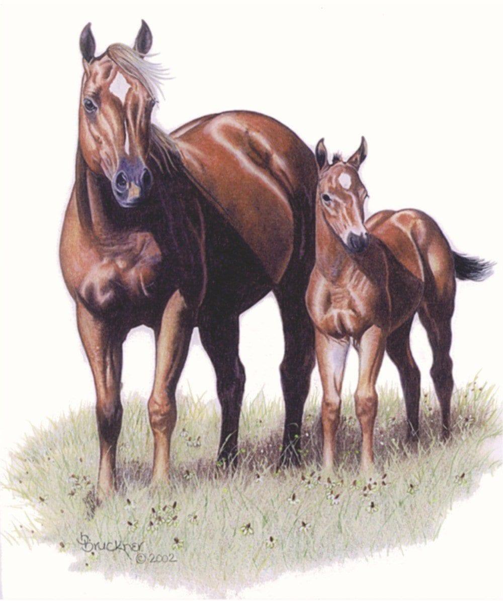 стоит сто картинок лошадей вариантов окраски присутствуют