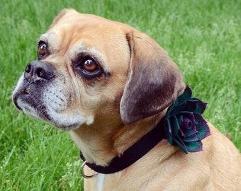 Easy Dog Succulent Collar Tutorial