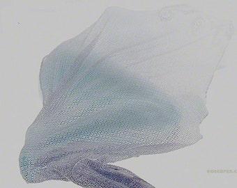 Thinly Veiled: no 3 -  8x12 Print - Fine Art Print