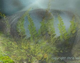 Síochána no 3 - Fine Art Print - 8 x12 - Artist Chris Scheel - Peaceful Ethereal Water Ferns