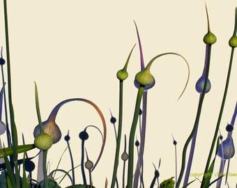 Pods - Fine Art Print - 8 x12 - Artist Chris Scheel