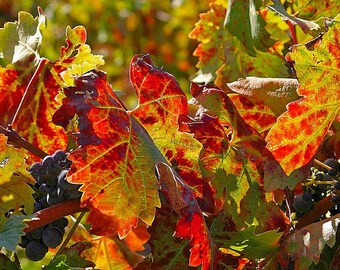 Fall in Wine Country Note Cards