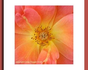 Mandala Art - Photograph Rose Livin Easy - Flower Mandala - Signed Fine Art Photograph
