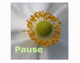Photo - PAUSE- Anemone - Flower Mandala Inspirations - Signed Fine Art Photograph