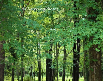Woodland Photograph, Forest Photo, Indiana woods, Nature Photograph, Fine Art Photograph, 8 x 10 photography print, Unframed, Free Shipping