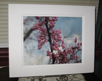Matted, Spring, Blooming, Redbud, Tree, Jeffersonville, Indiana, Fine Art, Photography, Print, 8 x 10, Glossy, OOAK