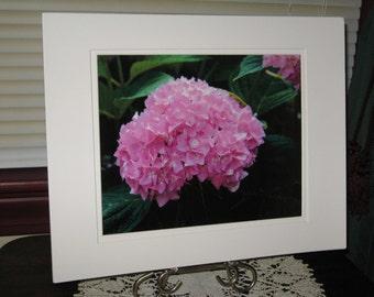 Pink Hydrangea Photo, Flower Print, Nature Photography, Louisville KY, Jefferson Square Park, Summer Bloom, Pink Glitter, OOAK, Matted