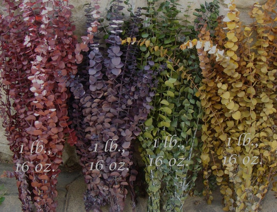 Dyed Very Fragrant Preserved Eucalyptus Bunch- Dried Floral Arrangements- Colorful, Soft, Fresh, Fragrant, Large Bunches