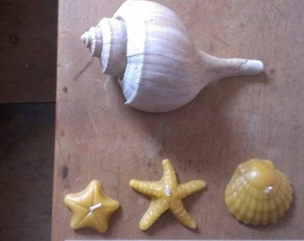seaside candles (set of 3) / pure beeswax candles- nautical decor