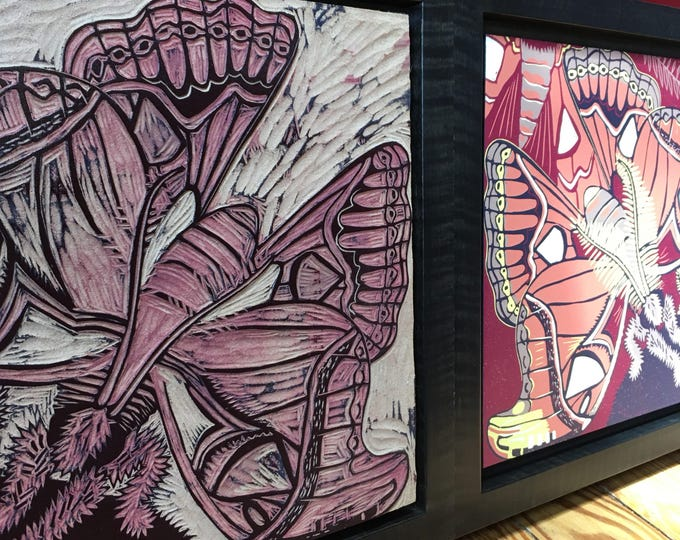 Atlas Moth Original hand printed woodcut and woodblock framed in curly maple