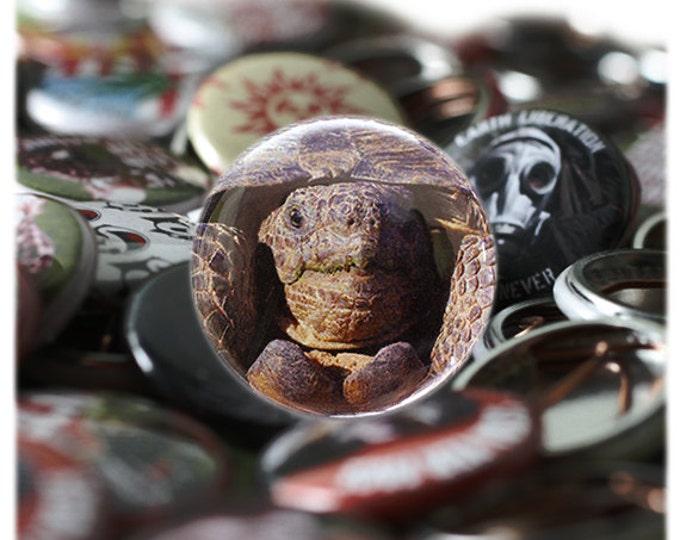 Desert Tortoise Button or Magnet - Ships Free