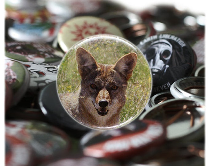 Desert  Coyote 1 inch Button or magnet - Free Shipping