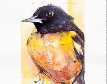 Baltimore Oriole - Original Watercolor