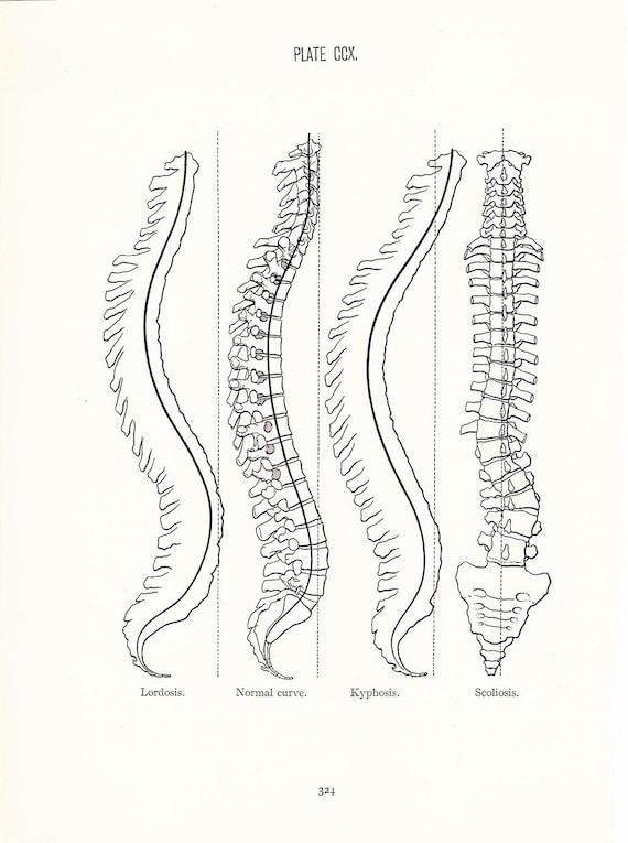 Anatomy 1926 Human Anatomy Print Spinal Curve Vintage