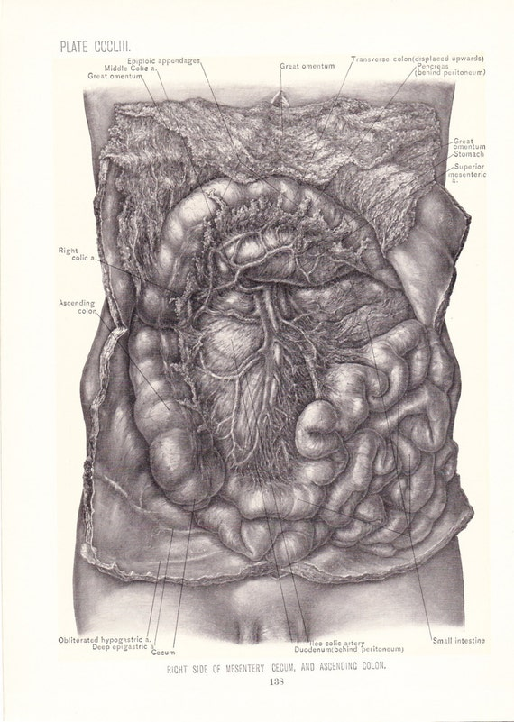 1899 Human Anatomy Print Right Mesentery Descending Colon Etsy