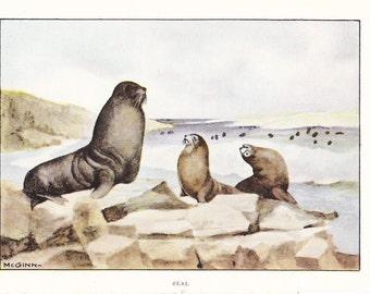 1926 Animal Print - Seal - Vintage Antique Natural History Home Decor Art Illustration for Framing