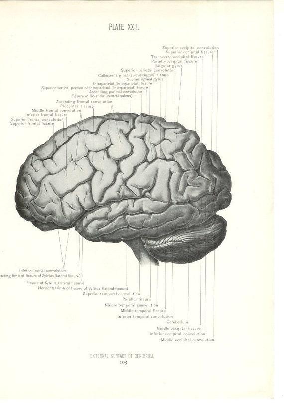Anatomy 1926 Human Anatomy Print Side View Of Brain Etsy