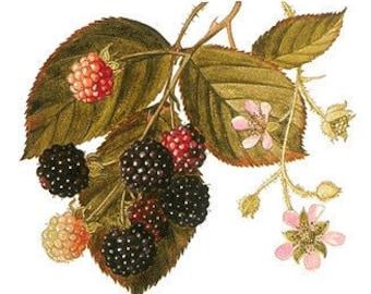 Blackberry Jam Fresh Homemade