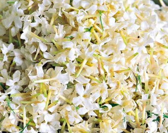 Jasmine Perfume, Fragrance, Sexy Floral Scent, Aphrodisiac, Seductive Sensual, Best Favorite Top, Pure Heady Strong, Long Lasting, Fragrance