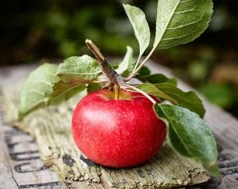 Vermont Apple Honey, Bath & Body Works Type