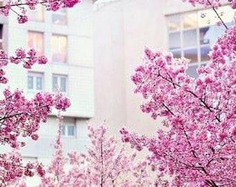 Sakura, Lush Type