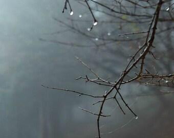 Twilight Woods Perfume