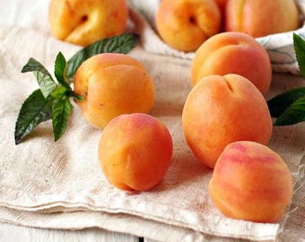 Fig Apricot, Fresh Type