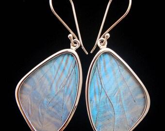 Pearl Blue Morpho Butterfly Wing Earrings in Medium