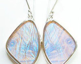 Pearl Blue Morpho Butterfly Wing Earrings in Size Medium