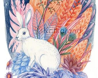 Rabbit and Flora - 8x10 PRINT, Hare, White Rabbit, Plants, stars, night sky, Art Illustration, Color Pencil Drawing,