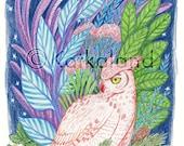 Owl and Flora - 8x10 PRINT, barn owl, Plants, stars, night sky, Art Illustration, Color Pencil Drawing