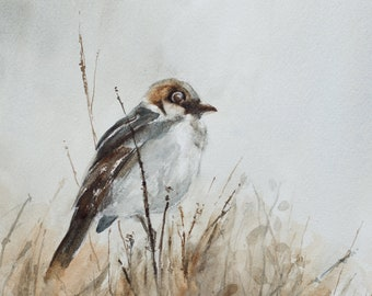 Watercolor SET of Sparrow Paintings. Watercolour Bird PRINT Set of sparrow. Watercolor Art Print of bird Art Print. Brown bird PRINT set