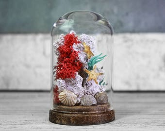 Beach Decoration in a Small Glass Display- Handmade Coral Reef - Starfish - Seashells - Nautical - Coastal  2.75 x 1.73 inches / 7 x 4,4 cm